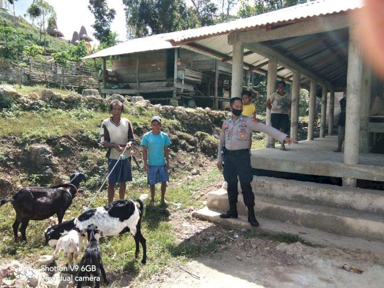 Kerja Sama Bripka Lalu Bersama Warga Kampung Gollupoto Dalam Membangun Perekonomian Masyarakat