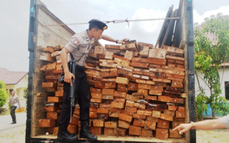 Oknum Pegawai Honorer ( Polhut ) Terlibat Illegal Logging