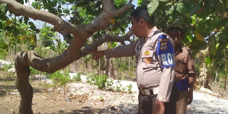 Residivis Pencuri & Penadah Hewan Ternak Berhasil Ditangkap Tim Polsek Kodi Bangedo