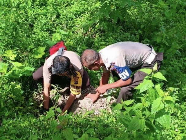 Polri Peduli Penghijauan | 'Penanaman Serentak', Polsek Wewewa Selatan Tanam Pohon Mangga dan Cendana